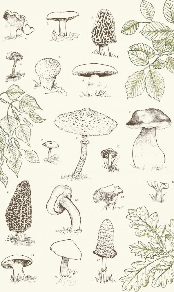 Tea Towel 1: Mushroom print